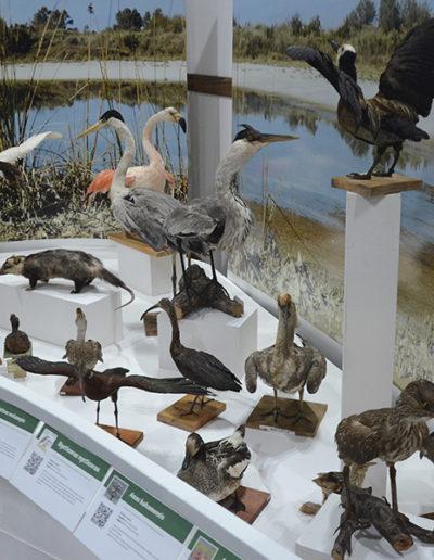 Museo de Ciencias Naturales Rafael Reinoso - Interior
